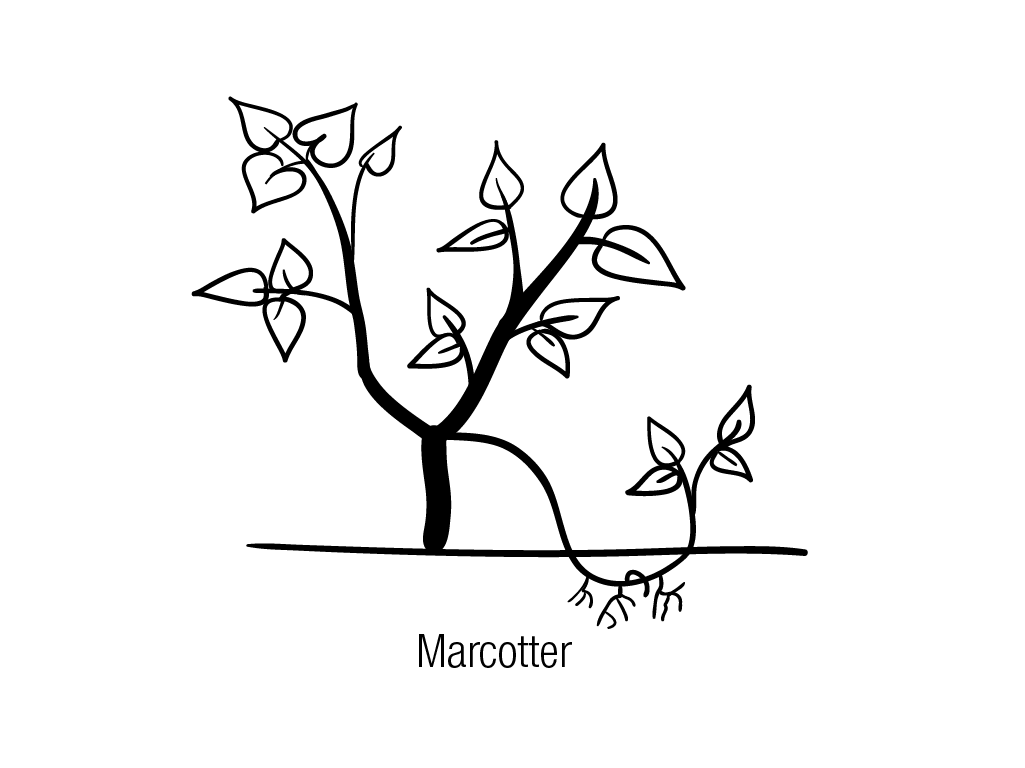 Marcotter